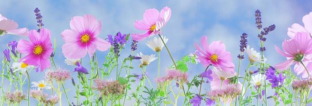 Pretty-Flowers-in-a-Row